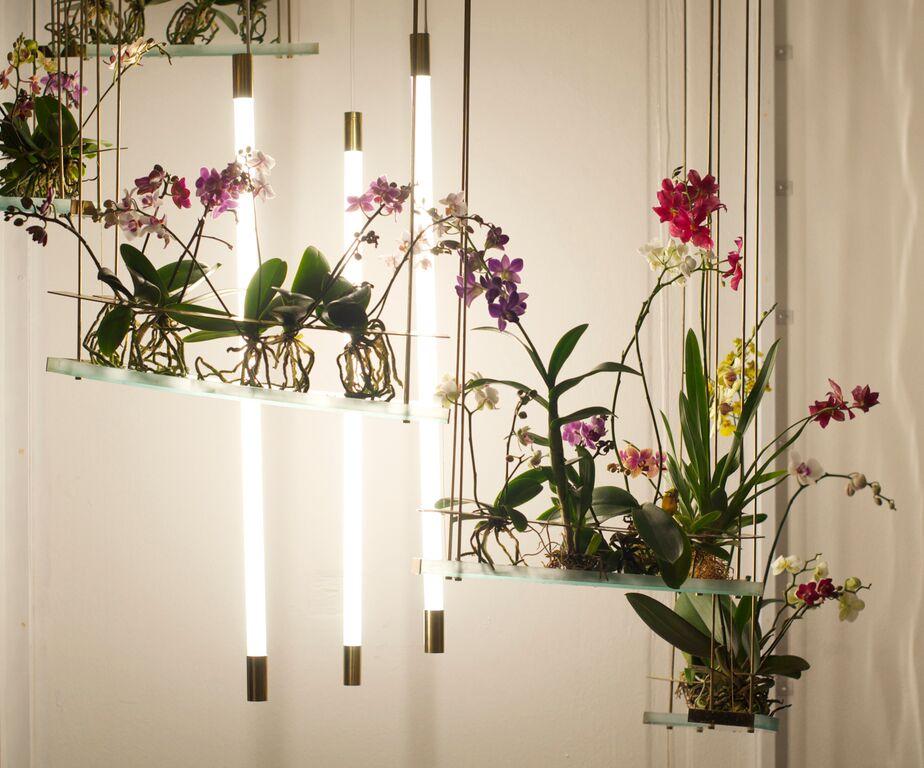 Studio ayaskan 39 s indoor ecosystem mimics the sensory for Indoor nature design challenge