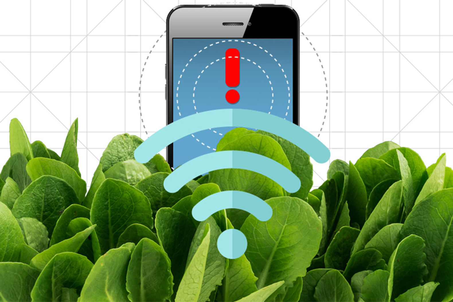 Nanobionic spinach leaves