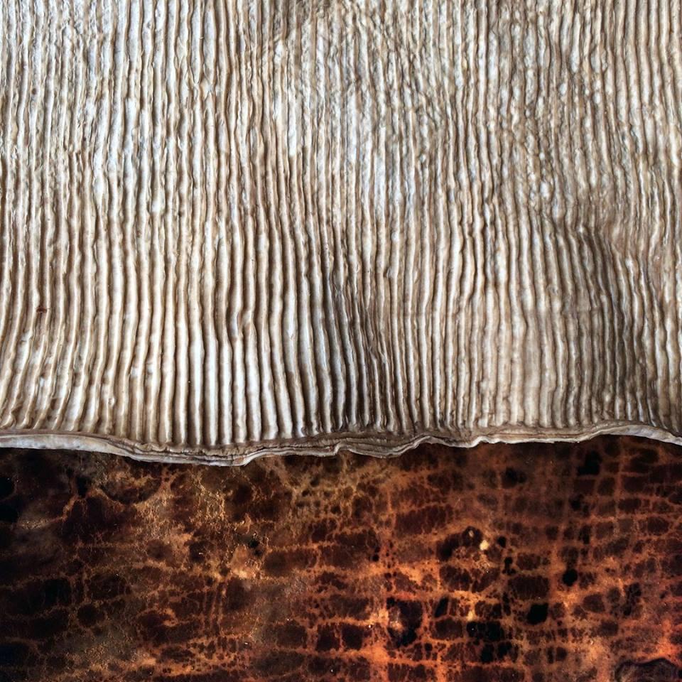 mushroom leather  the future is fungal