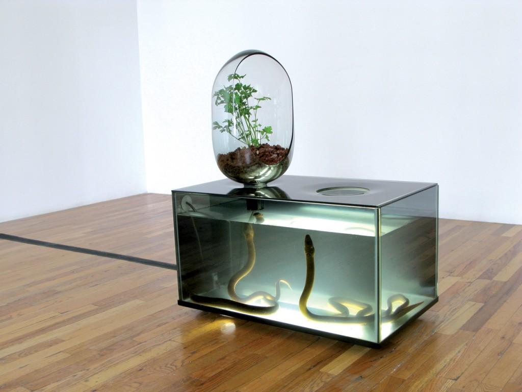 Countertop Aquaponics System : Countertop farming Design Indaba