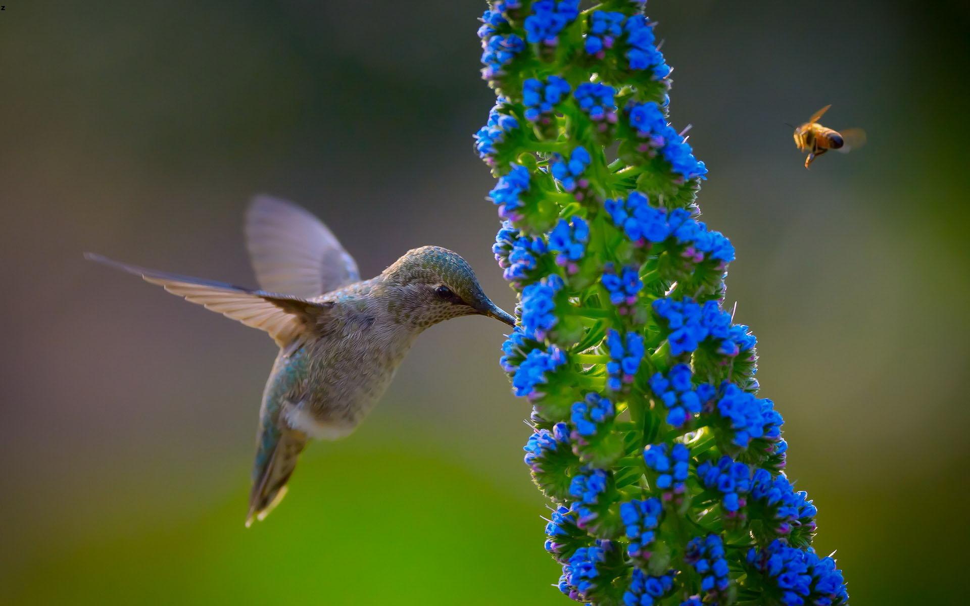 New Wind Turbine Mimics The Hummingbird