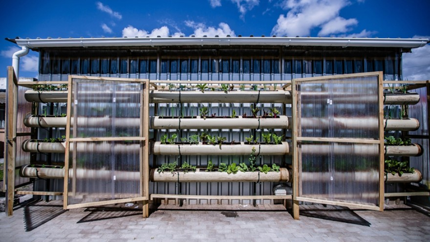Vertical food garden at Gege crèche in Langa. Image: Sandy Greenway.