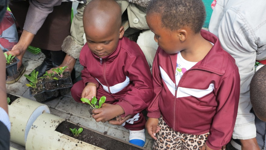 The children planting for the vertical food garden at Gege crèche in Langa. Image: Sandy Greenway.