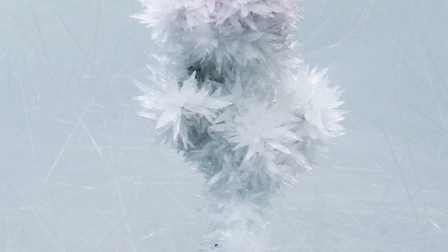 Crystallize exhibition: Rose by Tokujin Yoshioka.