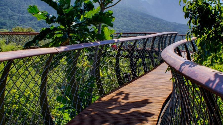 The Boomslang canopy walkway at Kirstenbosch Botanical Garden. Image Adam Harrower. & A lofty walkway | Design Indaba