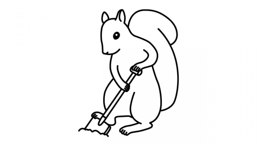 Did you know? Millions of trees in the world are accidentally planted by squirrels that bury nuts and do not dig them up.