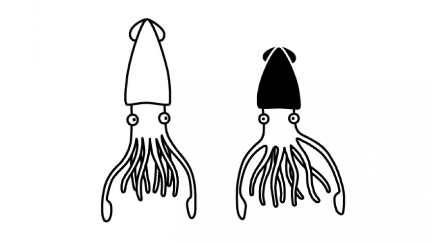 Did you know? Squid communicate with each other by changing the colour of their bodies.