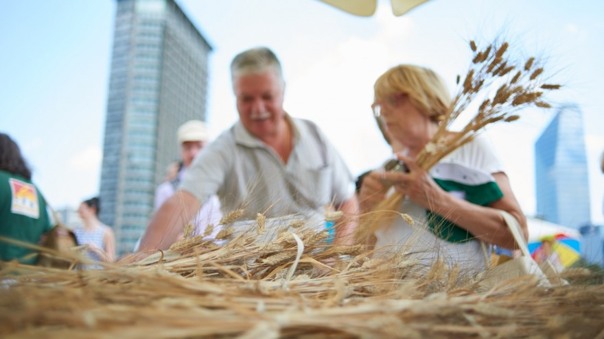 Milan locals share in the reaping of the wheat.