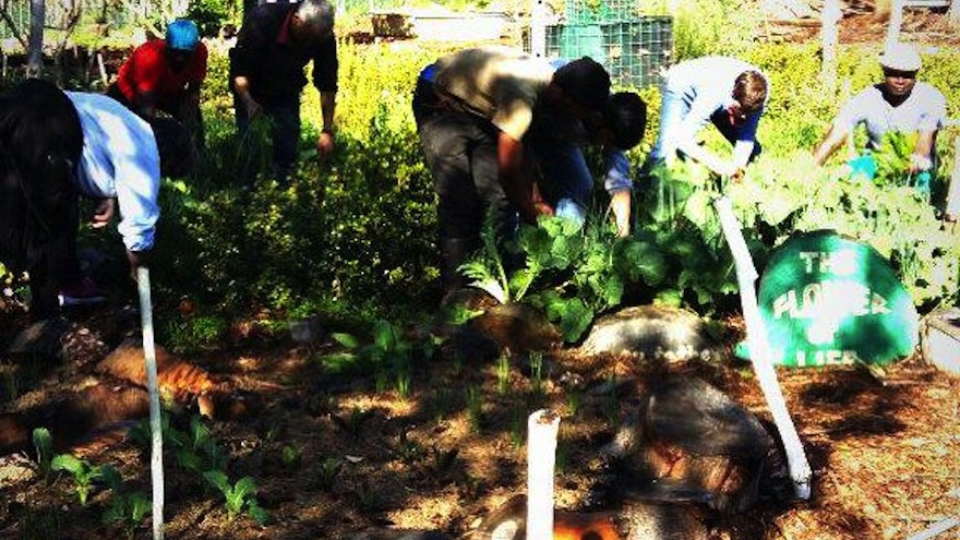 Soil for Life trained members of the Cape Town community in organic food gardening using low-cost soil building, water-wise and environmentally friendly technologies on Mandela Day. They used the R1000 to stock up on resources for Saturday's workshop.