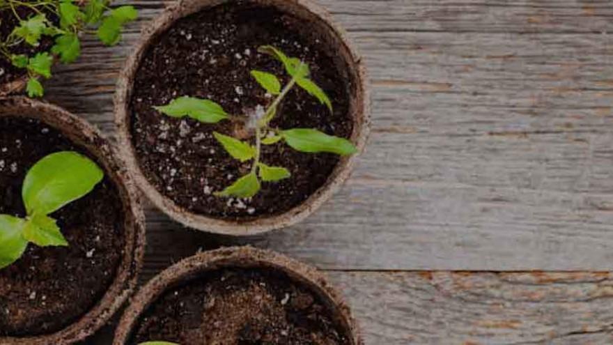 Citycropps plants