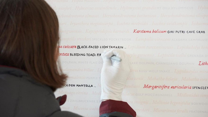 Visitors contribute to the Seeing Red..Overdrawn exhibition