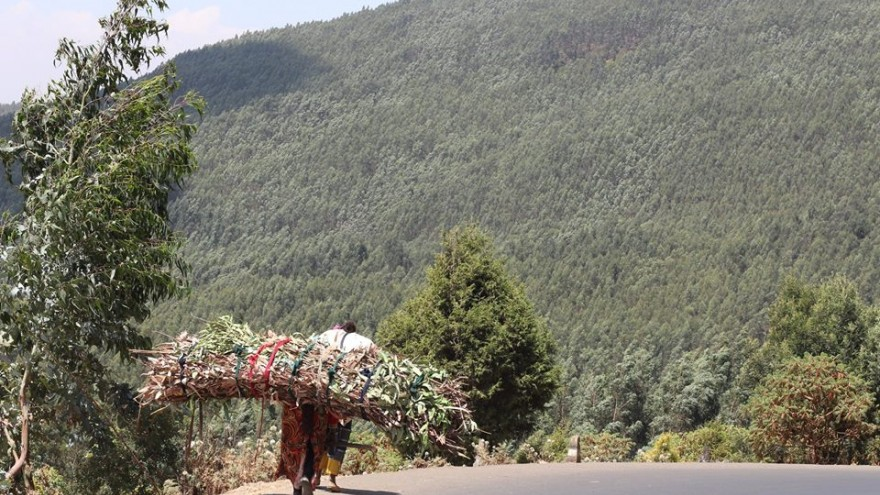 Kebebush walks 10 to 15 kilometres to Mount Entoto to collect wood and leaves