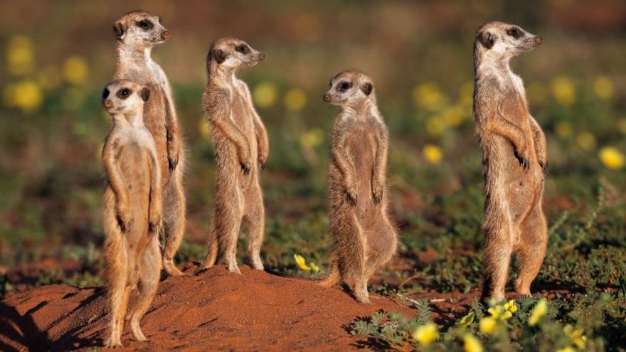© SOUTH AFRICA by Michael Poliza & Friends. Photo © 2010 Michael Poliza.