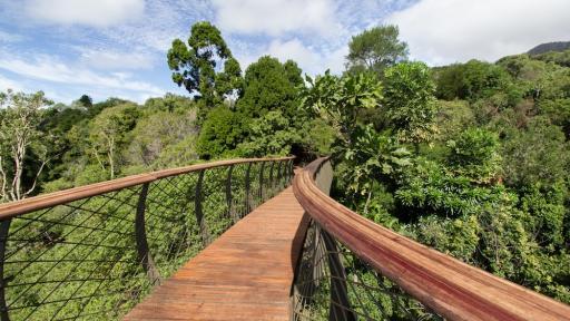 The Boomslang canopy walkway at Kirstenbosch Botanical Garden. Image: Adam Harrower.