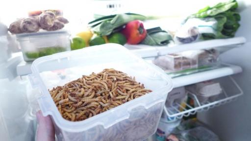Farming your own mealworms could be a reality with this desktop farm.
