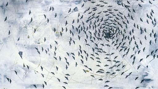 Paul Raas: Swarms
