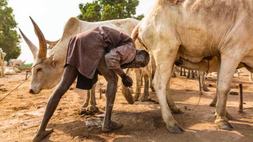Introducing the Mundari of South Sudan, Cattle of Kings. Image: © Tariq Zaidi / ZUMA Press