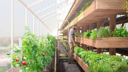 4 Innovative ways to locally grow food