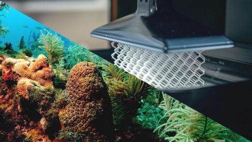 Coral reef 3D printing