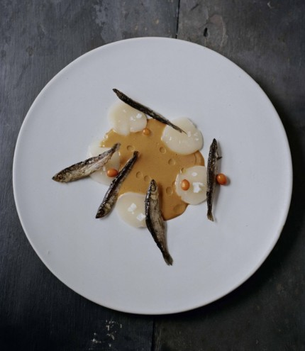 Scallops with sea urchins, sea buckthorn and miukko. From Noma: Time and Place in Nordic Cuisine. Photo by Ditte Isager. Courtesy of Phaidon Press, www.phaidon.com