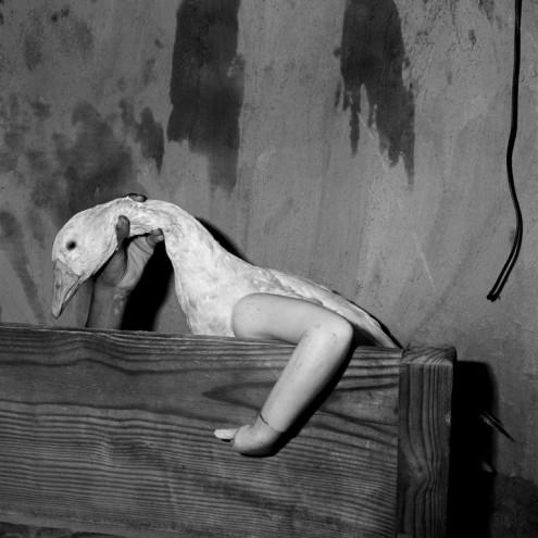 One Arm Goose, 2004. Courtesy of Roger Ballen.