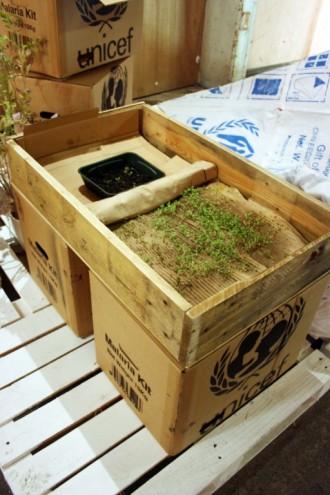 Growing seeds in cardboard.