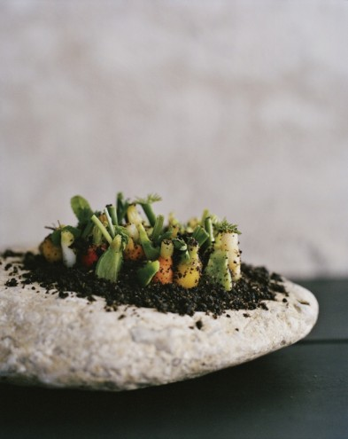 Vegetable field from Noma: Time and Place in Nordic Cuisine (Phaidon Press). Photo by Ditte Isager.