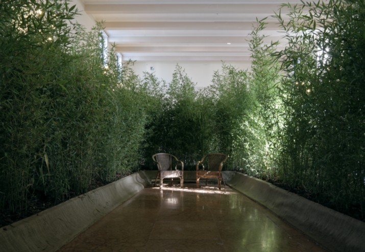 Angola's pavilion at the 2012 Venice Architecture Biennial, which proposed the planting of Arundo Donax, a tall perennial cane, to create a new type of common ground in the city. Courtesy of Beyond Entropy Limited. Photo Credits:  Paolo Utimpergher.