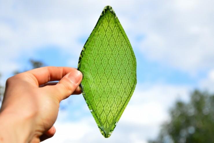 """""""Silk Leaf""""."""