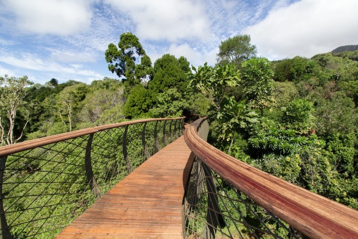 The Boomslang at Kirstensbosch.