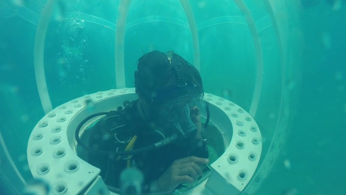 Italian scuba-diving father and son have found a way to grow fresh food nearly 10 metres underwater in the sea