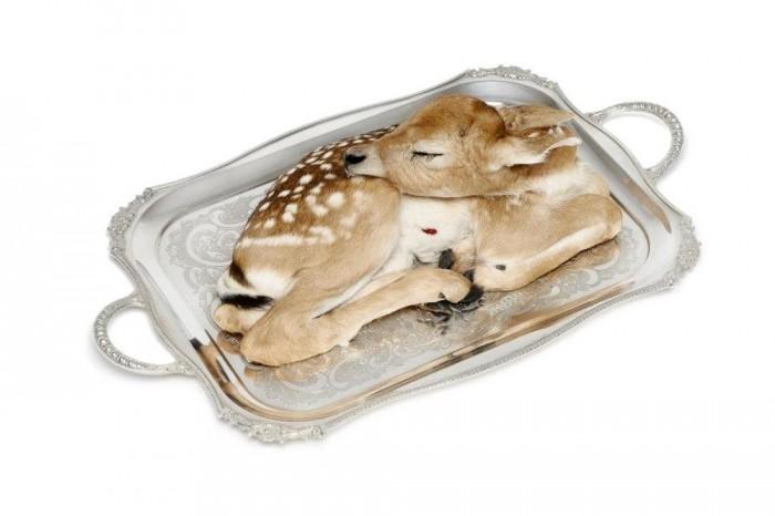 Taxidermist Julia deVille uses dead animals to celebrate life.