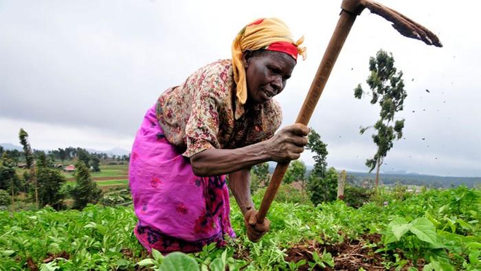 Women tending to farm-fields in Kenya