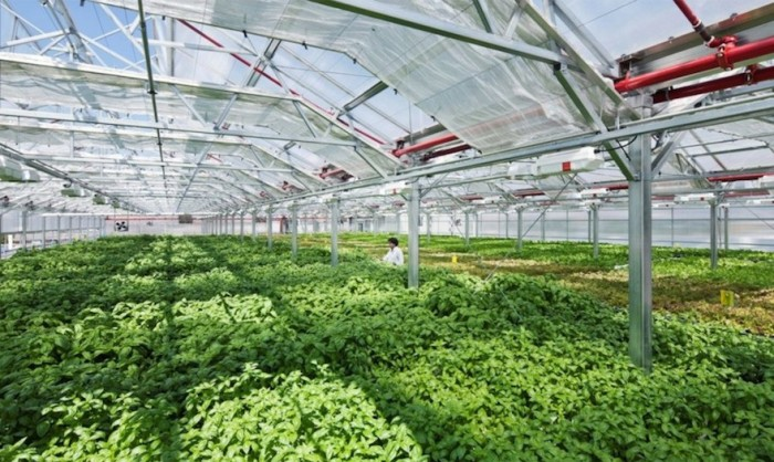 the worlds largest rooftop farm