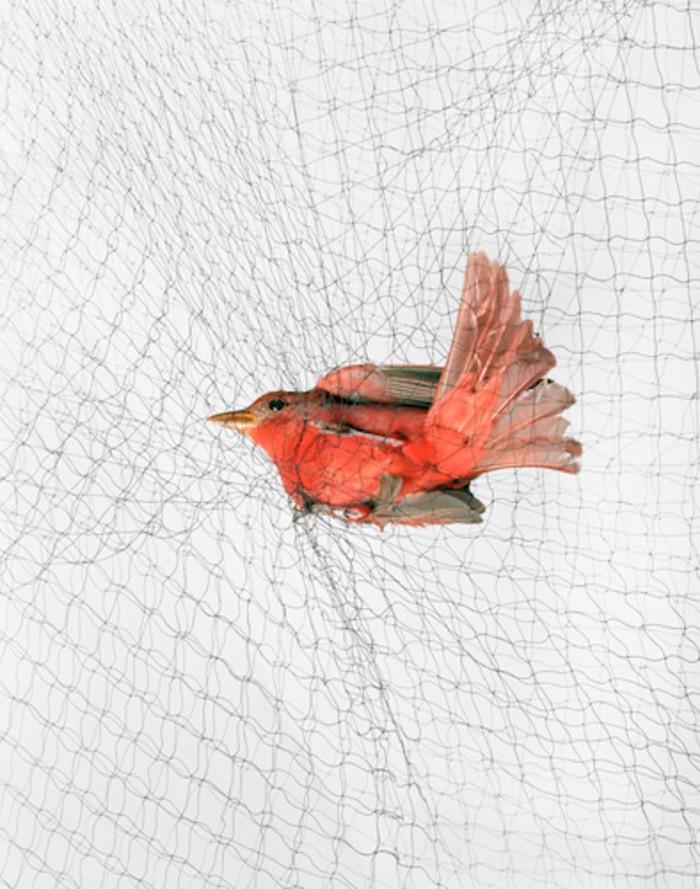 Photographs by Todd Forsgren
