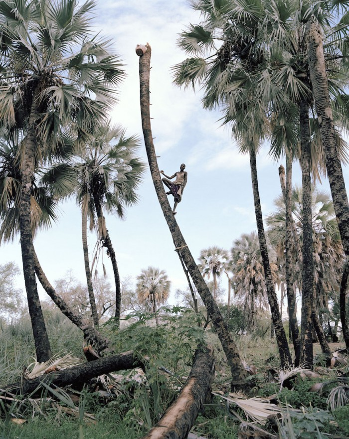 Kyle Weeks: Palm Wine Collectors