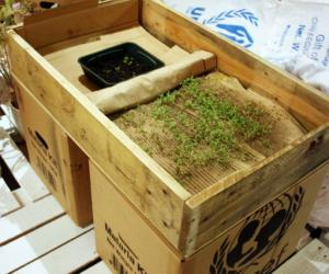 Growing seeds in cardboard by Justin Kim.
