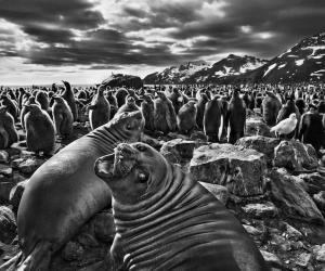 Genesis © Sebastião SALGADO / Amazonas images