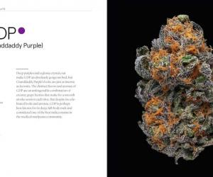 Green: A Field Guide to Marijuana details over 150 strains