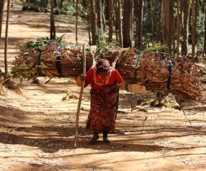 Martha Tadesse captures Ethiopian wood carriers