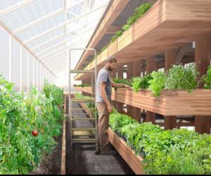 4 Innovative ways to locally grow food