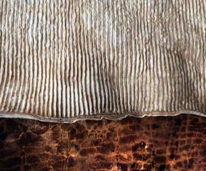 Mycoworks mushroom leather