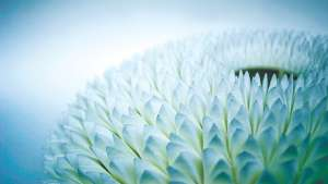 The Chrysanthemum Centrepiece by Michaella Janse van Vuuren