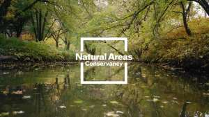 Natural Areas Conservancy of New York City identity by Paula Scher.