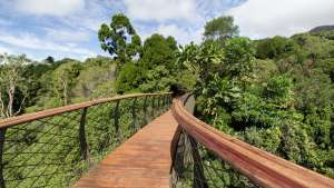 The Boomslang canopy walkway at Kirstenbosch Botanical Garden. Image: Adam Harrower.