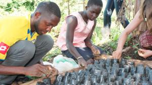 Tree Adoption Uganda