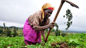Women tending to farm-fields in Kenya