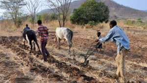Zambia subsistence farming