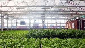 The world's largest rooftop farm