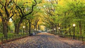 Urban trees as sustainability power tools for better cities